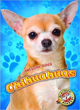 awesome-dogs-chihuahuas