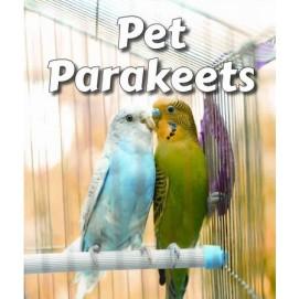 pet-parakeets